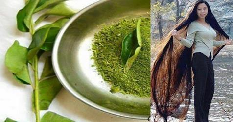 Длинные и сильные волосы за один месяц с помощью использования одной травы (рецепты)