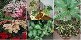 Топ-10 смертельных растений, которые вы должны немедленно убрать из своего дома!