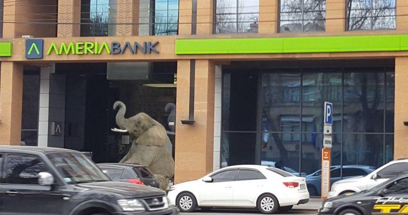 Երեկ Երևանում հայտնված փիղը հասավ Ameriabank