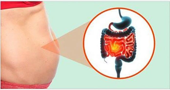 Как улучшить ваши кишечные бактерии и начать похудение!