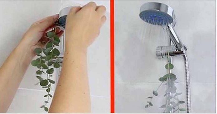 Вот почему вы должны принимать душ с этим специфическим растением!