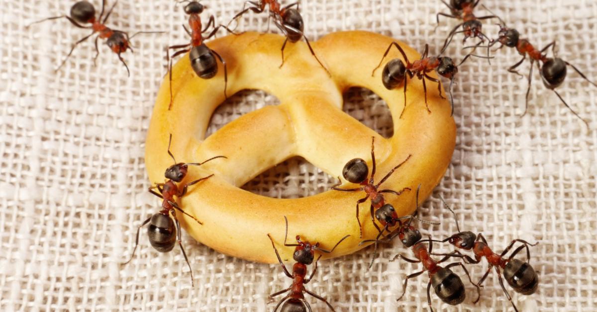 Մրջյուններին տանից «դուրս հրավիրելու» ամենապարզ եղանակը