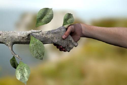 Дендротерапия — лечение энергией деревьев