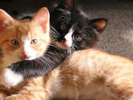 Кот увидел, свою любимую с другим котом . Его реакция взорвала интернет!