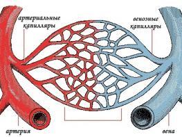 Укрепление сосудов и капилляров эффективными методами