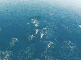 Դրոնը նկարահանել է ծովում լողացող տարօրինակ էակների․ Կան մարդիկ, ովքեր կարծում են, որ դրանք ջրահարսեր են․ Իսկ դու՞ք