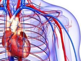 Плохое кровообращение: 7 признаков, которые не стоит игнорировать